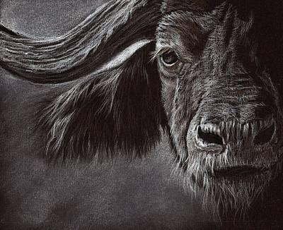 African Buffalo Art Print by Heidi Kriel