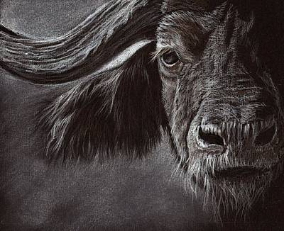 Art Print featuring the drawing African Buffalo by Heidi Kriel