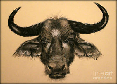 Drawing - African Buffalo by Michelle Wolff