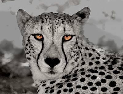 African Cheetah Art Print