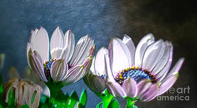 African Daisy Detail Art Print by Donna Brown