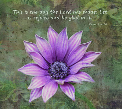 Photograph - African Daisy With Scripture by Sandi OReilly