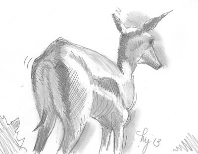 Drawing - African Deer Drawing by Mike Jory