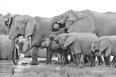 Photograph - African Elephant - Happy Family by Hermanus A Alberts