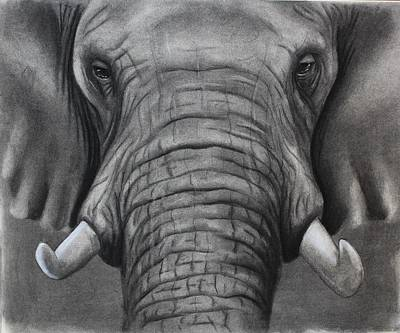 Drawing - African Elephant by Alan Conder