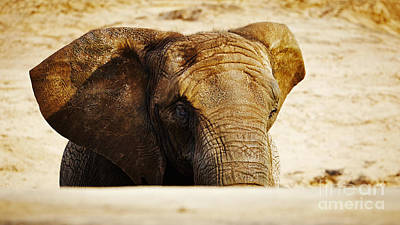 On Trend At The Pool - African Elephant behind a hill by Nick  Biemans
