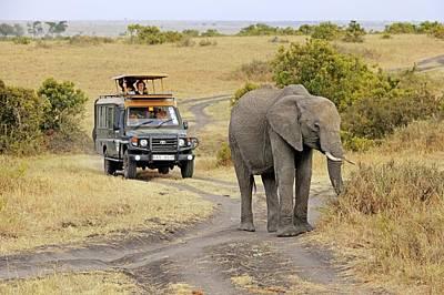 Masai Mara Photograph - African Elephant by Bildagentur-online/mcphoto-schulz