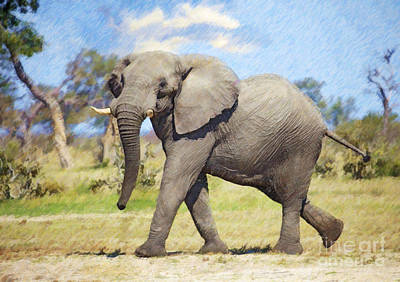 Digital Art - African Elephant Bull by Liz Leyden