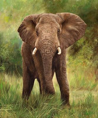 Animals Paintings - African Elephant by David Stribbling