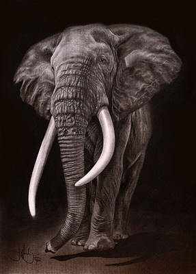 Elephant Pencil Drawing Drawing - African Elephant Drawing by John Harding