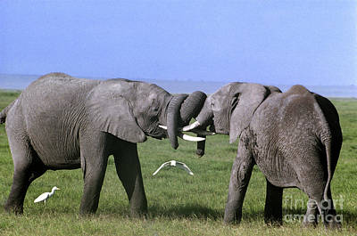 Photograph - African Elephant Greeting Endangered Species Tanzania by Dave Welling