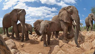 Photograph - African Elephant Herd Kenya by Tui De Roy