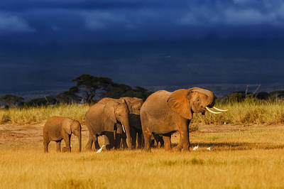 Photograph - African Elephant Herd by Maggy Meyer
