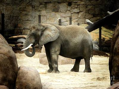 Cheyenne Mountain Zoo Photograph - African Elephant by Michelle Frizzell-Thompson