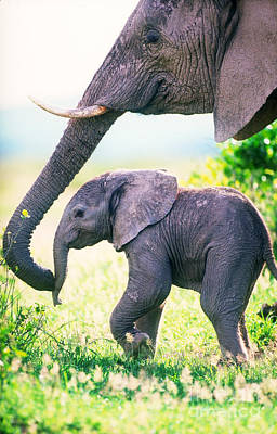 Elephant Photograph - African Elephant Mother And Young by Art Wolfe