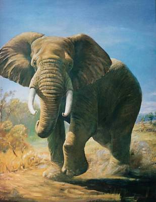 Painting - African Elephant by Peter Jean Caley