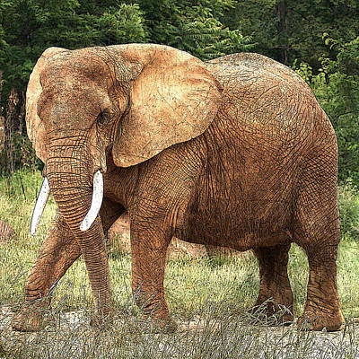 Photograph - African Elephant by TnBackroadsPhotos