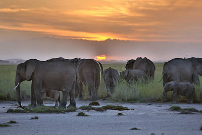African Elephants At Sunset Art Print by 1001slide