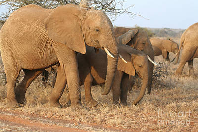 Photograph - African Elephants by Liz Leyden