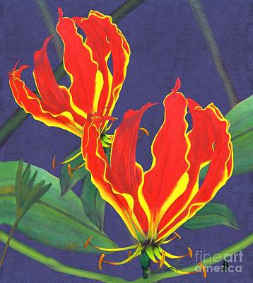 African Flame Lily Art Print by Sylvie Heasman