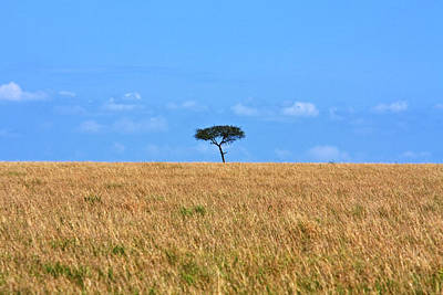 Photograph - African Grasslands by Aidan Moran