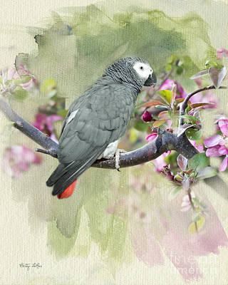 African Gray Among The Blossoms Art Print by Betty LaRue