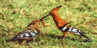 Photograph - African Hoopoe Feeding Chick by Liz Leyden