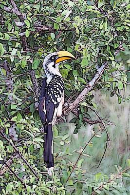 Hornbill Digital Art - African Hornbill  by Beth Wolff