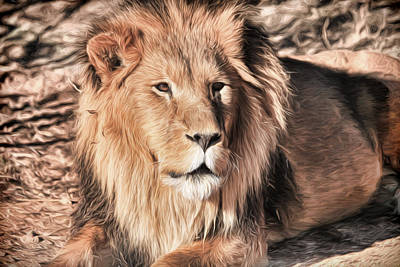 Photograph - African Lion- Lazarus by Donna Kennedy