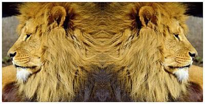 African Lion Original
