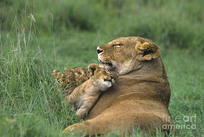 Art Print featuring the photograph African Lions Mother And Cubs Tanzania by Dave Welling