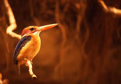 Kingfisher Mixed Media - African Pygmy Kingfisher by Anthony Dalton