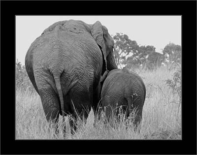 Photograph - African Safari Elephants 3 by Jeff Brunton