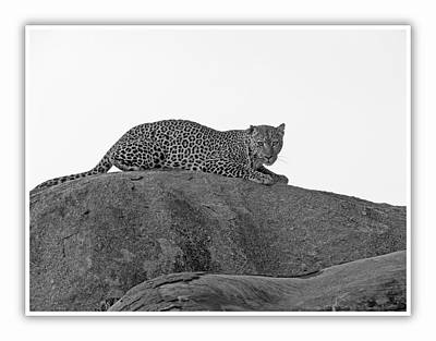 Photograph - African Safari Leopard 3 by Jeff Brunton