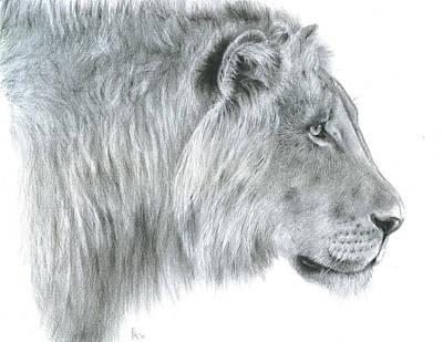 Drawing - African Safari Lion  by Fran Megerdichian