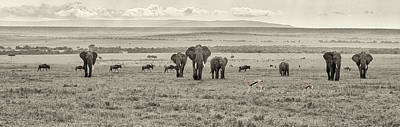 Photograph - African Savannah Pano by June Jacobsen