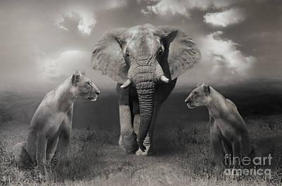 Animals Photos - African scenery by Christine Sponchia