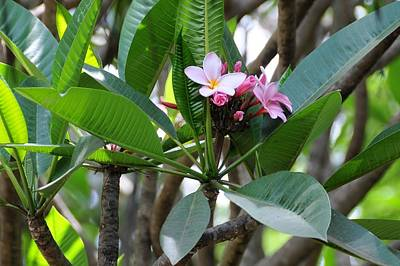 Photograph - African Series Flower In Tree by Katherine Green