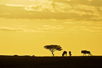 Photograph - African Silhouette by Michele Burgess