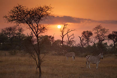 African Sunrise Art Print by Craig Brown