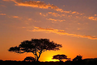 African Sunset Art Print by Sebastian Musial