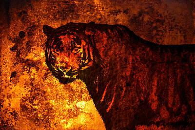 African Tiger  Original