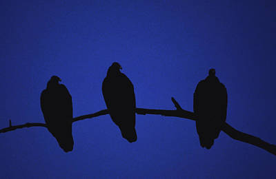 Photograph - African Vultures In Early Nightfall. by Joe  Connors