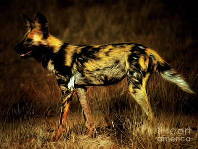 Photograph - African Wild Dog 20150211brun by Wingsdomain Art and Photography