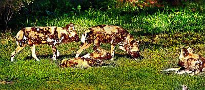 Photograph - African Wild Dog Family by Miroslava Jurcik