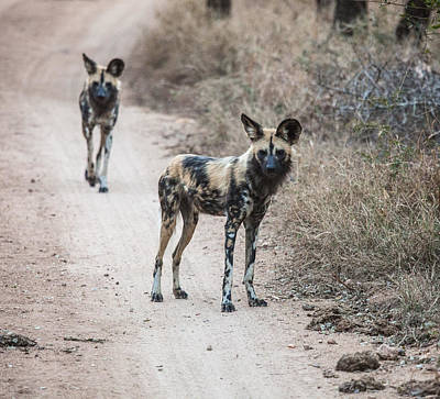 Photograph - African Wild Dogs by Craig Brown