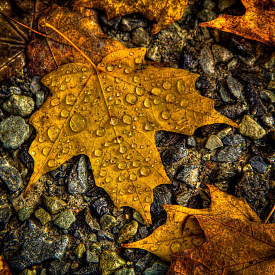 Autumn Leaf On Water Photograph - After An Autumn Rain by David Patterson