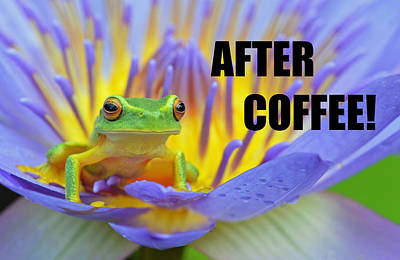 Photograph - After Coffee by David Clode