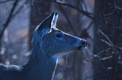 Moonlit Night Photograph - After Midnight - Deer by SharaLee Art