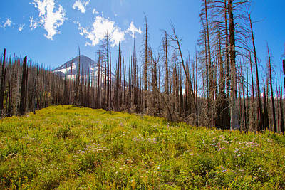 Photograph - After Noon On Mt Hood by Kunal Mehra